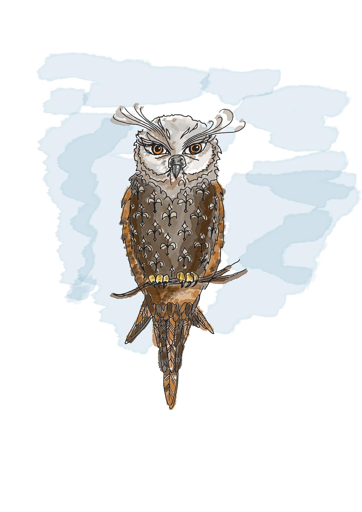 Eule/Owl